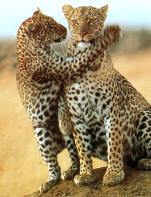 Kenyan Safari Tours,Kenyan Safari Tours