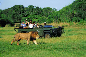 Kenyan Safari Tours Packages